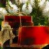 Savon huile arbre à thé