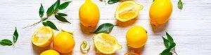 Culture d'un citronnier