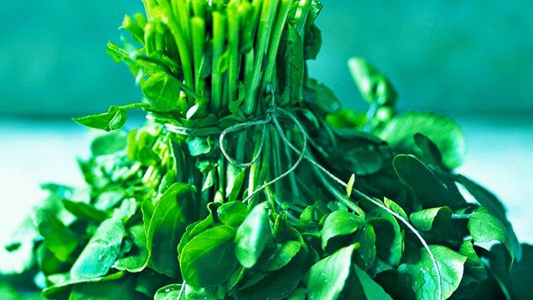Le cresson -plante médicinale