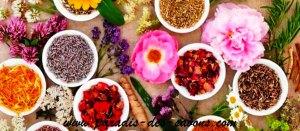 Plantes séchées de Paradis Des Savons
